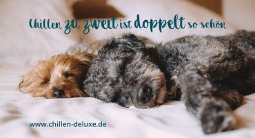 Postkarte: Zwei Hunde schlafend im Bett