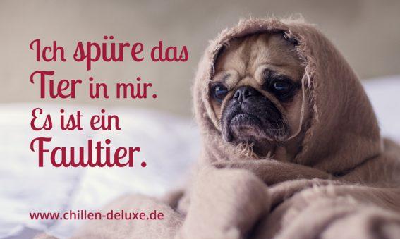 Postkarte: Mops liegt in Decke gehüllt auf Bett